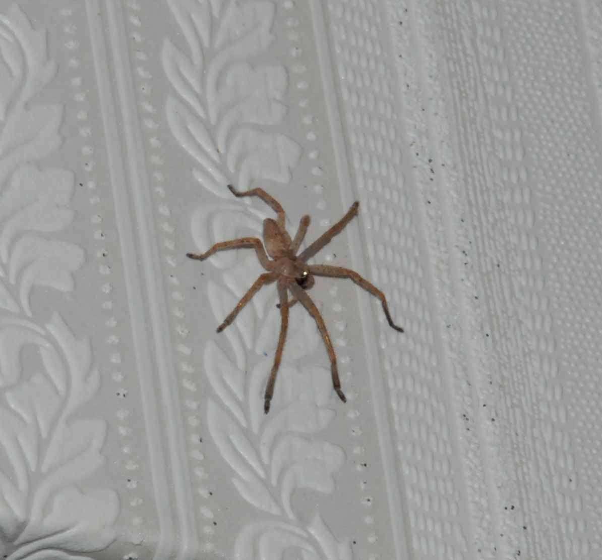 Средства от пауков в квартире_1