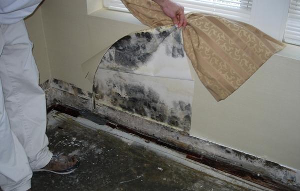 Как бороться с грибком под обоями в домашних условиях_3