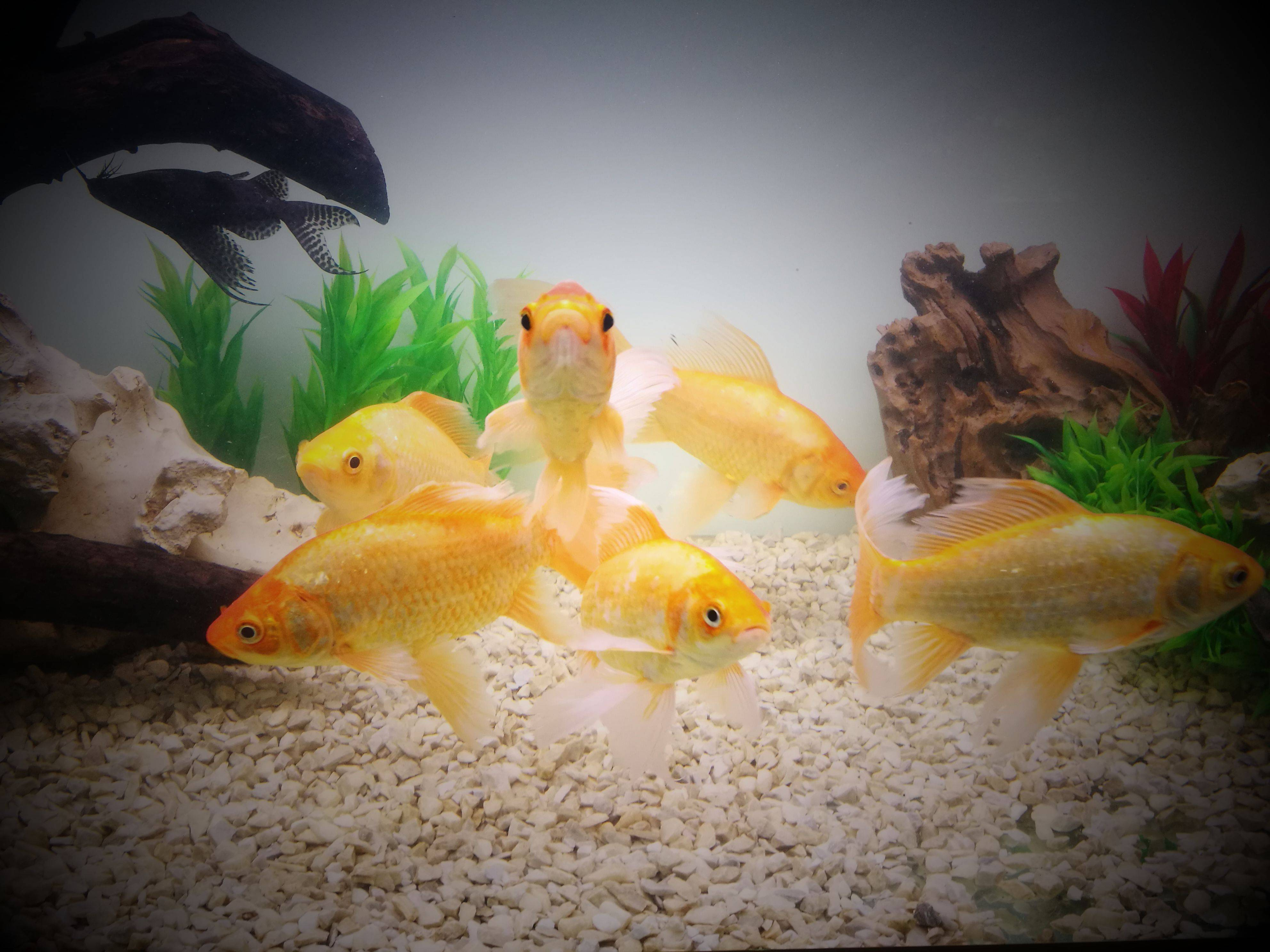 Как нужно эффективно и правильно чистить аквариум_1