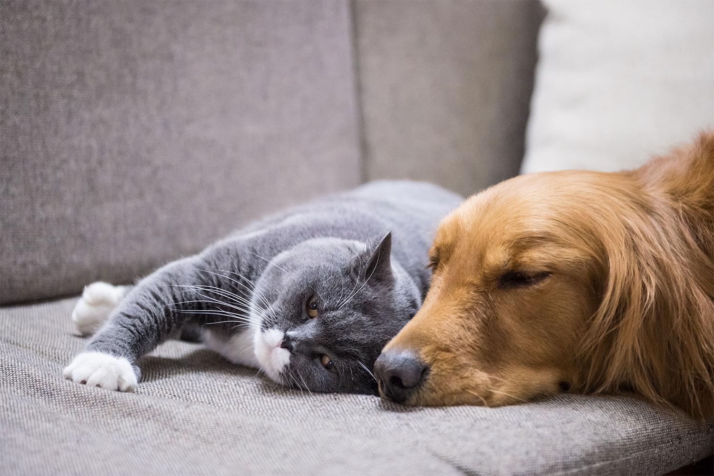 Какую обивку мебели выбрать, если в семье есть животные