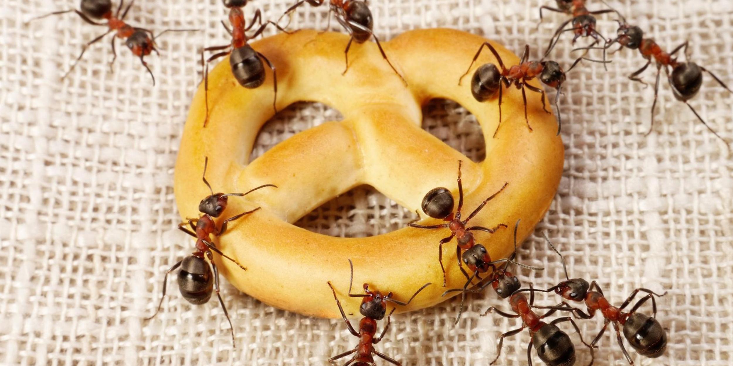 ants_1478245482.jpg