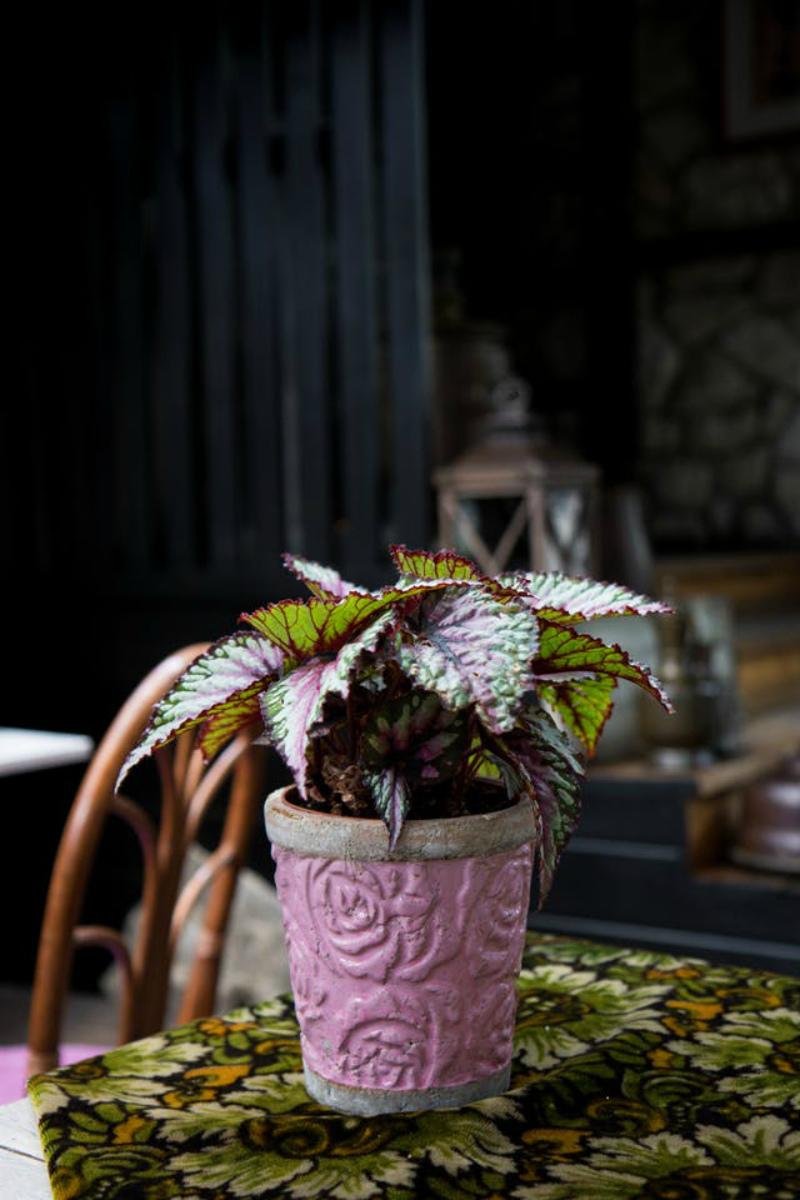 Какие цветы можно выращивать на подоконнике темной комнаты
