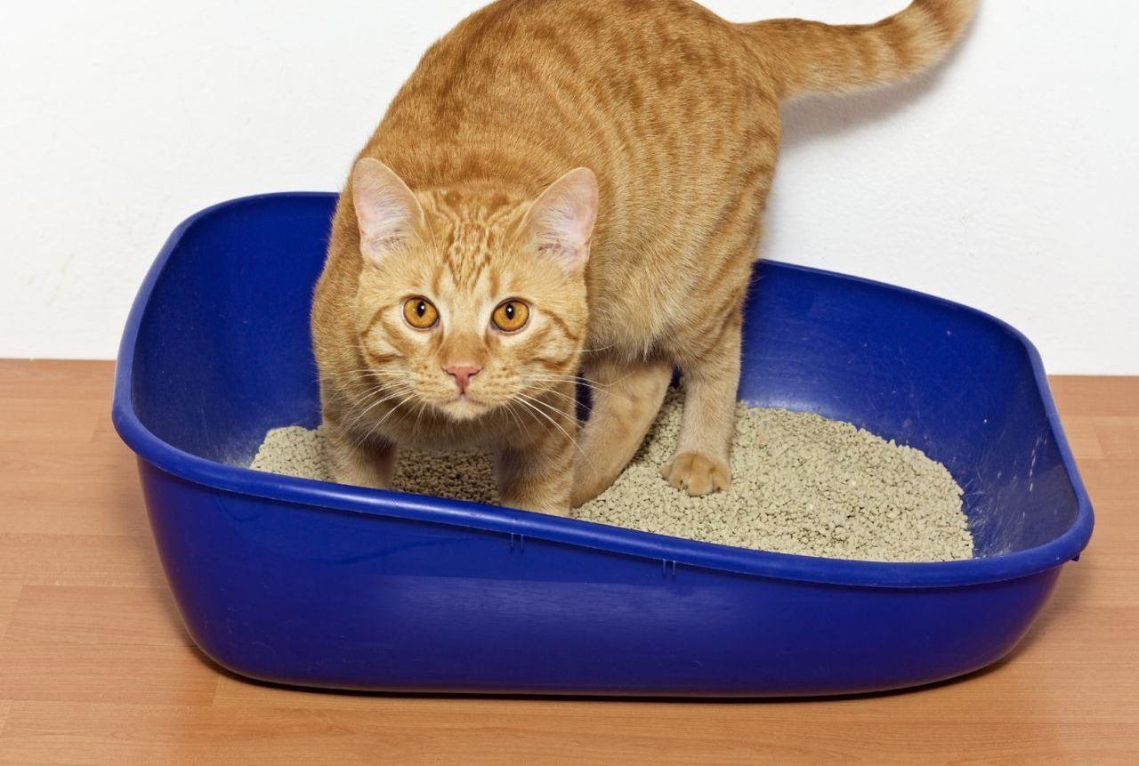 Как очистить и продезинфицировать кошачий лоток